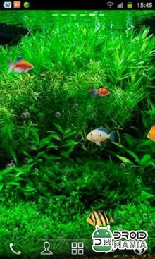 Скриншот Fish Tank 3D Live Wallpaper №1